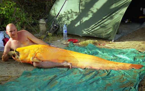 The Yellow Submarine 1999