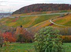 Mein herbstlicher Blick auf die Weinberge (chrissie.007) Tags: deutschland laub herbst aussicht bunt weinberge schwabenland remstal