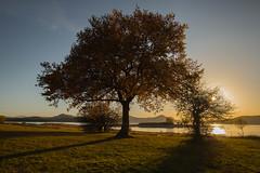 Atardecer Pantano Otoño (Garimba Rekords) Tags: panorama naturaleza eh agua árboles paisaje pantano contraste otoño alava euskadi araba vitoriagasteiz euskal herria atadecer