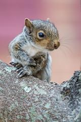 Itsy Bitsy Baby Squirrel (Squirrel Girl cbk) Tags: cute lost virginia october babysquirrel 2015 sciuruscarolinensis easterngraysquirrel