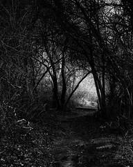 Through the thicket (trochford) Tags: autumn trees blackandwhite bw usa monochrome forest canon dark ma mono blackwhite december exterior outdoor path lexington massachusetts newengland pathway overgrowth thicket forbidding