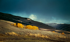 Pretty Autumn Landscape in Yellowstone - Zak Marcom (Zak Marcom) Tags: autumn trees sunset sky sunlight mountain forest landscape photo nationalpark pretty outdoor rustic dramatic yellowstone mountainside wyoming idyllic natureshots photographyart professionalphotography naturallandscapes naturephotographer nationalscenicarea beautifullandscape sunsetphotography autumnlandscapes photolandscape landscapephoto chicagophotographer sceniclandscapes landscapingphotos mountainphotography landscapegallery cloudphotography bestphotographers landscapepictures artinphotography westernphotography yellowstonephotography moderntrees amazinglandscapephotography wyomingphotography landscapespictures zakmarcom landscapetreeswyoming