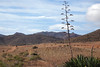 Por el sendero de los Genoveses (#MariaOrtega) Tags: sanjose trail almeria cabodegatanijar senderodelosgenoveses