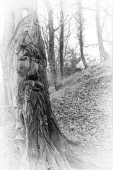 The Green Man - Andy O'Neill (Rockman of Zymurgy) Tags: nature reserve goldenvalley local wick lnr industrialarchaeology southgloucestershire