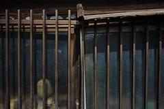 20160930_DP0Q5743 (NAMARA EXPRESS) Tags: street window house fine outdoor color foveonclassicblue toyonaka osaka japan foveon sigma dp0 quattro wide ultrawide superwide namaraexp
