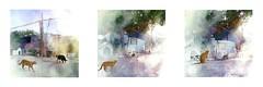 Serie du 15 08 16 : Quai Brassens, Ste (basse def) Tags: sete cats sun port