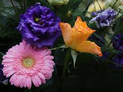 Schnen Freitag! (ingrid eulenfan) Tags: blumen blumenstraus gerbera rose wassertropfen 7dwf
