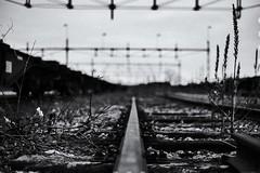 Norrkping 14/10 (micke_wall) Tags: norrkping sweden sverige stad blackandwhite city rail sausage korv korvmoj bokeh
