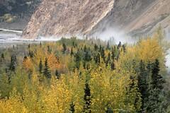 Denali NP ~ dusting down the road (karma (Karen)) Tags: denalinp alaska tundrawildernesstour usparks trees fallcolors roads dust topf25