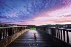 Un mundo demasiado grande (Mimadeo) Tags: puppy dog bridge small walk little park sunlight outdoor river sunset plentzia plencia friend