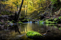 Deep into the Falls (LionArt1970) Tags: falls automn fall leaves water river rocks trees calm woods quiet canada canon canon7dmarkii 1635mm