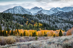 Sierra Evening (Kirk Lougheed) Tags: california easternsierra northlake usa unitedstates aspen autumn fall forest landscape mountain outdoor snow tree