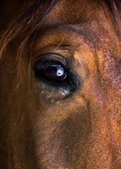 wisdom (Marksh100) Tags: hourse eye closeup
