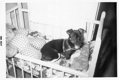 Penny (neshachan) Tags: family familyphotos penny dog