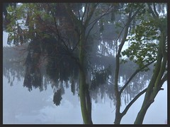 ghosthunter morning (MissyPenny) Tags: fog trees morning ghostly bristolpennsylvania laich misty moody pdlaich usa