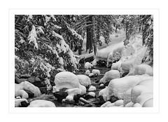 _MAH7748-Modifier (anthonymahieu | photos) Tags: france nature landscape paysage neige snow winter hiver torrent blanc white frozen mercantour montagne mountain leboron blackandwhite noiretblanc monochrome nikon nikond7000 d7000 bw