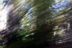 empire grade (JonathanCohen) Tags: forest drive driving icm motion blur motionblur abstract dappled speed trees leaves sun