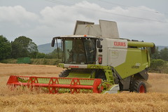 Claas Lexion 650 Combine Harvester cutting Winter Barley (Shane Casey CK25) Tags: claas lexion 650 combine harvester cutting winter barley grain harvest grain2016 grain16 harvest2016 harvest16 corn2016 corn crop tillage crops cereal cereals golden straw dust chaff county cork ireland irish farm farmer farming agri agriculture contractor field ground soil earth work working horse power horsepower hp pull pulling cut knife blade blades machine machinery collect collecting mhdrescher cosechadora moissonneusebatteuse kombajny zboowe kombajn maaidorser mietitrebbia nikon d7100