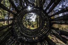 295#365 Nella tela del ragno (Fabio75Photo) Tags: bosco legno scultura vortice trentino arte sottobosco molveno brenta