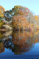 Reflected trees in fall (Read2me) Tags: autumn jacobspond trees leaves colorful orange pree cye she water reflection lake pond ge thechallengefactorywinner tcfunanimousnovember pregamewnner