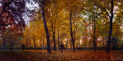 Autumnal loneliness (Le2 - www.le2.es) Tags: otoo autumn loneliness unity one leaves colour panoramic green garden trees yellow orange woman cold warm tones confidence confianza tranquilidad calm