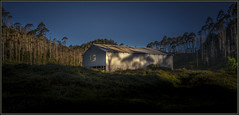 """Ye Old Wool Shed"" (eos1969) Tags: wool shed woolshed sheep country countryside sun set sunset evening blue sky tres trees forest forestry aluminium currugate shelter green mottled pine new zealand newzealand aotearoa nz flickr canon 5d 5dmkii dslr highlights shadows warm empty building field track farming farm farmer industry commercial photo photograph flickrtravelaward exposure 50 50iso raw lightroom adobe"