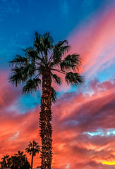 Beautiful Palm Tree (http://fineartamerica.com/profiles/robert-bales.ht) Tags: desertlandscape landscape scenic sunrisesunset sunrise sunset street palmtree southwest arizona red yellow silhouette clouds desert twilight sunrays orange nature beautiful colorful bright stunning mountain morning sensational spectacular cirrus southwestern horizon sonoran panoramic awesome magnificent peaceful surreal sublime magical spiritual inspiring inspirational tranquil sunlight wallpaper yuma robertbales
