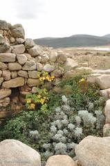 nuraghe Lerno, Pattada (Donna Nuragica) Tags: nuraghe lerno pattada civiltànuragica sardegna sardinia archeologiasarda donnanuragica montacuto patada