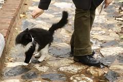 Yumak vs. Beyza (miskiamber) Tags: canon canontrkiye canonturkey canonphotography turkeycanon digital cat kedi friend mood