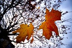 Zachtjes glijdt de vijvertuin de winter in... (KoiQuestion) Tags: vijver winter