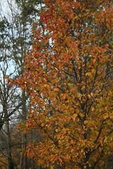 IMG_8984 (Geoff_B) Tags: badockswood bristol walkinthewoods autumn november unprocessed unedited