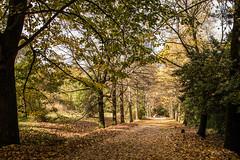 IMG_5139_LR_f (felixsea89) Tags: 216 alberi autumn autunno bosco foliage nature ottobre percorso relax season sentiero stagioni villabombarda