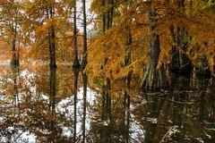 Couleurs d'automne (callifra7) Tags: canoneos70d efs18135mmf3556isstm isre cyprschauves automne