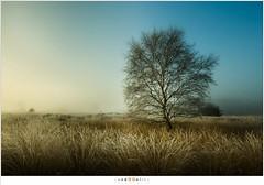 The transition (nandOOnline) Tags: mist morning strabrecht koud sunrise december nature nevel landscape vorst zonsopkomst dauw natuur strabrechtseheide cold fog ochtend landschap frost heeze nbrabant nederland