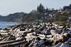 Driftwood on the Beach, Esquimalt Lagoon. (JL1967) Tags: 2016 bc esquimaltlagoon sonya77 tamron70200 beach driftwood victoria britishcolumbia canada ca colwood