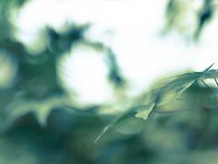 Sigma Bokeh (Richard Croft136) Tags: bokeh full frame shallow leaves green blurry smooth forest sky nikon d800 f14 prime lens sigma art