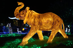 Elephant by night, Huis ten Bosch Japan