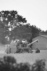 Erntezeit I (jda_ue) Tags: landwirtschaft bauer ernte uelzen strohhut mhdrescher sptsommer weizenfeld weizenernte erntezeit