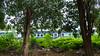 PeeVee Walks 25K KG Towers-1040250 (peevee@ds) Tags: city bangalore boundary peevee kempe gowda kempegowda 25kmwalk peeveewalks25k