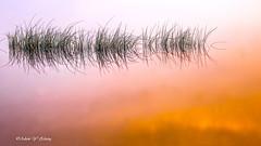 Random but Orderly Reflection (无序且有序的倒影) (Thank you, my friends, Adam!) Tags: morning reflection sunrise amazing nikon order florida random central dslr 自然 尼康 orderly 倒影 早晨 美 单反 greatphotographers world100f 有序 无序
