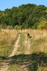 hazaindultunk / We started home (debreczeniemoke) Tags: autumn dog tree grass landscape meadow land kutya fa táj tájkép ősz frakk fű rét transylvanianhound erdélyikopó transylvanianbloodhound olympusem5