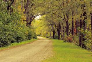 Chemin du parc Jean-Drapeau