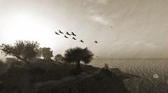 Frisland - A memory (alidamor.anatra) Tags: old birds landscape postcard sl secondlife frisland slinfo