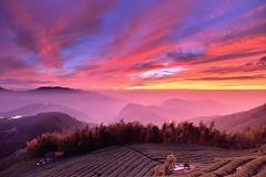 大崙山~火燒茶園夕彩~ Tea field Sunset (Shang-fu Dai) Tags: sunset sky clouds landscape nikon taiwan 南投 formosa 台灣 d800 火燒雲 銀杏森林 夕彩 afs1635mmf4 武岫 大崙山觀光茶園