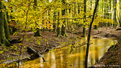 Signs of autumn ...2 (Alex Verweij) Tags: color green colors yellow canon 5d 40mm geel alexverweij