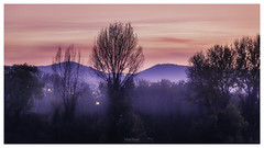 Dusk (Milos Krstic) Tags: blue trees sunset sky nature forest colorful dusk magenta atmosphere hills hour