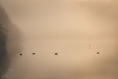 The Flock (GenerationX) Tags: trees mist water birds silhouette fog sunrise reflections landscape dawn mirror scotland shadows cross unitedkingdom ducks scottish neil calm gb marker trossachs barr gloaming aberfoyle lochard nohorizon kinlochard lochardforest canon6d
