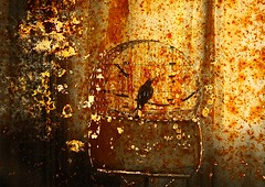 Da serie nada  pra sempre-SP. (nariobarbosa) Tags: brasil lembrana arte saopaulo arts liberdade brazilian memoria gaiola daserienaeprasempre
