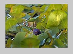 """Паньков В. Любопытная норка • <a style=""""font-size:0.8em;"""" href=""""https://www.flickr.com/photos/127888002@N02/23315685762/"""" target=""""_blank"""">View on Flickr</a>"""
