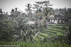 Indonsie - Bali (Steph le Gnou) Tags: voyage bali asie tourdumonde indonsie batukaru unmondedegnous